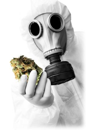 "Marijuana is Not Always ""All Natural"""