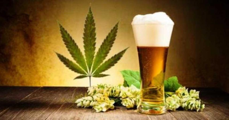 Marijuana Beer - Pot Beer