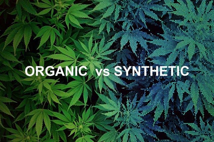 Organic_vs._synthetic_CBD